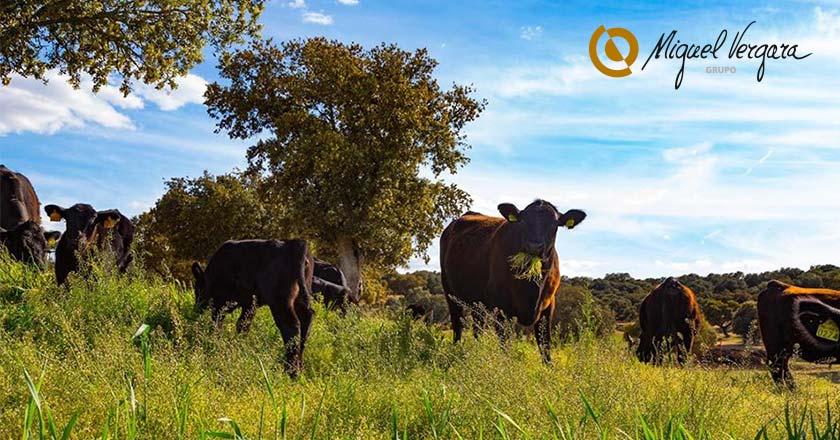 bienestar animal carne calidad