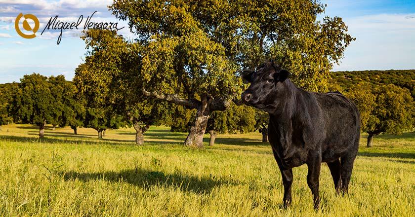 Produccion carne sostenible